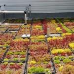 Mundys Bay Public School Roof Garden